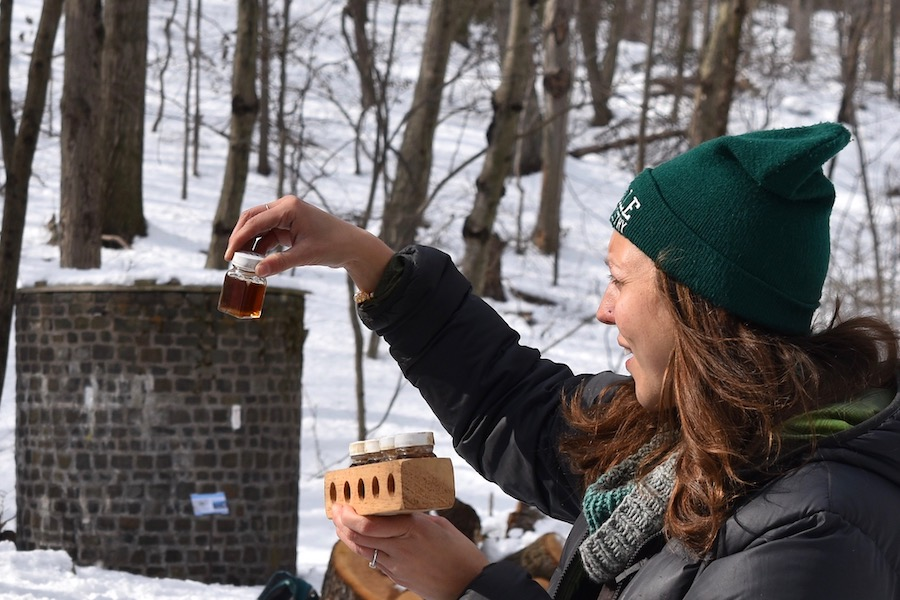 New Haven Trees Yield Liquid Gold
